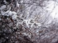 Terminy ferii zimowych 2012 - wielkopolskie