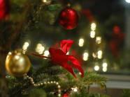 Boże Narodzenie 2014 w Bieszczadach