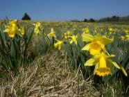 Jak wygląda wiosna w Polsce